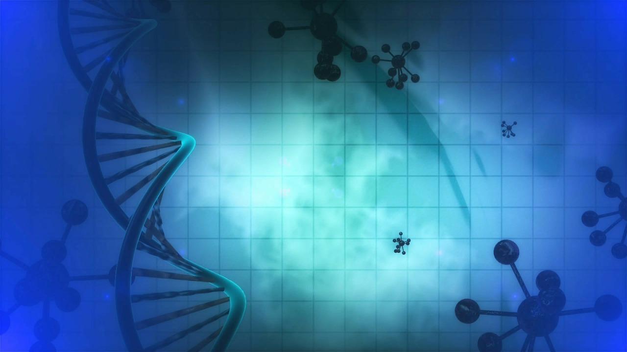 DNA nucleare e mitocondriale, la prova genetica nell'omicidio Yara Gambirasio